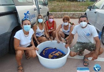 Proseguono le operazioni di salvataggio sugli animali marini