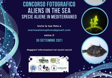 Contest fotografico Aliens in the Sea